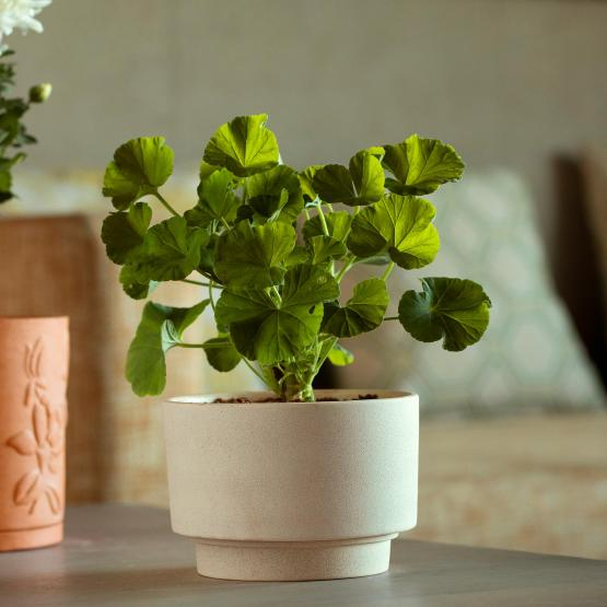 Ort Ceramic Planter (Short)